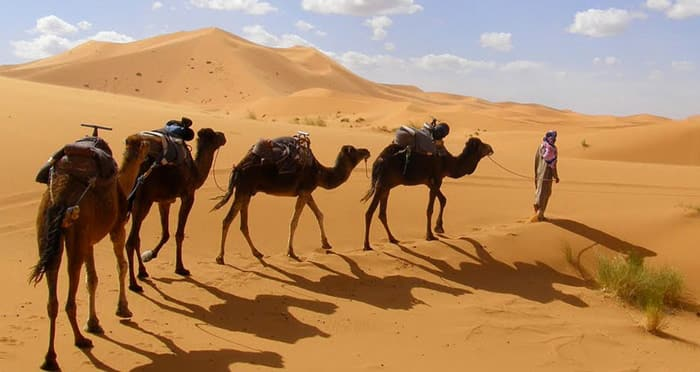 camel trek in the dunes blog