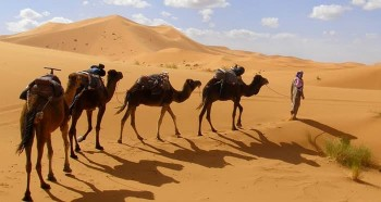 camel trek in the dunes